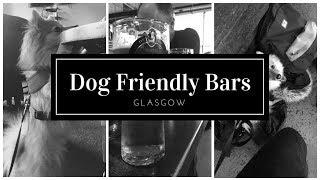 Dog Friendly Bars | Glasgow