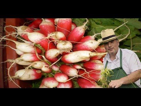 10 me cours comment semer des radis youtube - Comment semer des radis ...