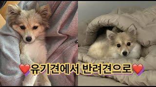 유기견 입양 브이로그 / 포인핸드어플 / 위더스동물보호…