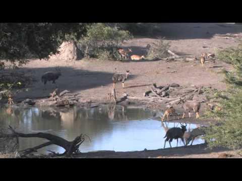 Stock Footage For Sale - KwaZulu Natal