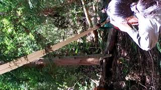 ただいま建設に向けて頑張っている、というゲストハウスの建材としてこの「杉」を利用するということで、お手伝いと体験が一度にできるイベントに行ってきました。(ただし、 ...