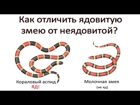 Как определить ядовитую змею?
