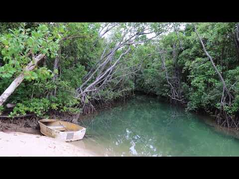 Our Visit To Cow Bay In Tropical Daintree Rainforest In Queensland Australia
