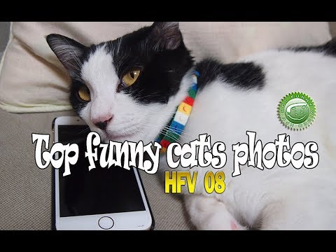 TOP FUNNY CATS PHOTOS 2017 - HFV 08