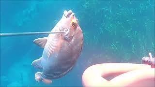 """#바다속#잠수#다이빙 """"누구나 다이빙을 할수는…"""
