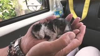 【飼育】赤ちゃん猫を拾ったので育てるの巻 thumbnail