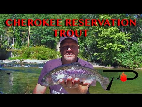 Cherokee Trout Fishing