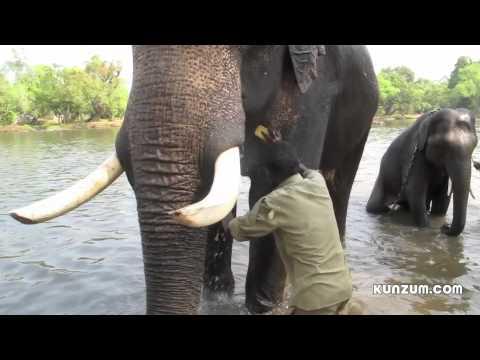elephant tube8