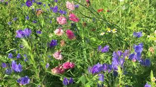 Zapylacze na łące - Raj dla owadów