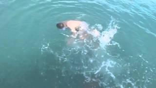 SEADOG and the Sharks