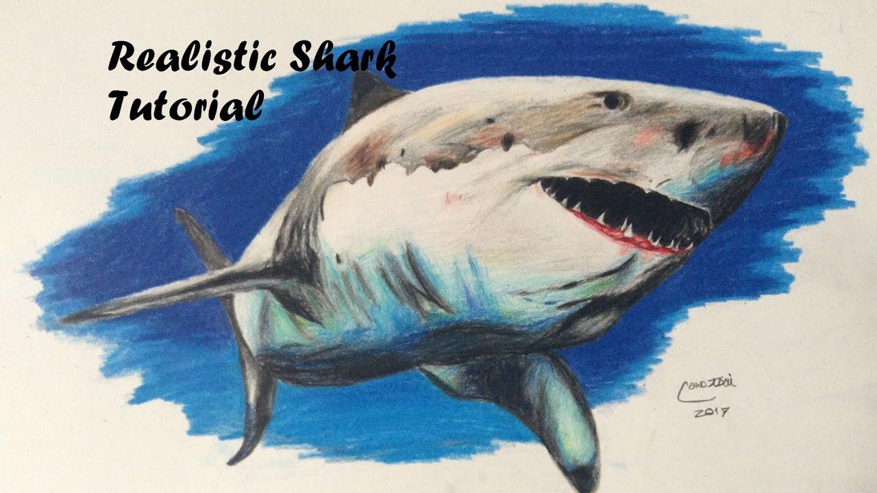 Realistic Shark Drawing Tutorial - YouTube