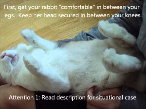 Rabbit and Trimming its Nails - YouTube