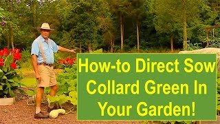 Basic Gardening Tips: Tips and Ideas on How-to Direct Sow Collard Greens in Your Garden