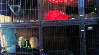 Ferret Motion Detection!