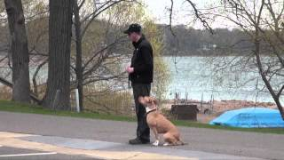 Ruby (pitbull Terrier) Boot Camp Training Video