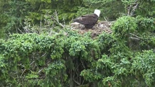Historic Eagle Cam Footage @ Glacier Gardens, Juneau, AK