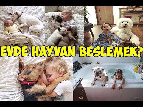 Evde Hayvan Beslemenin Yararları Ve Zararları!!