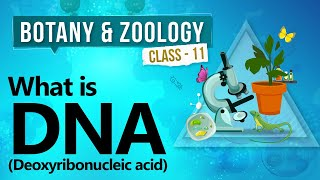 What is DNA (deoxyribonucleic acid) - Biochemistry of Cell - Biology Class 11