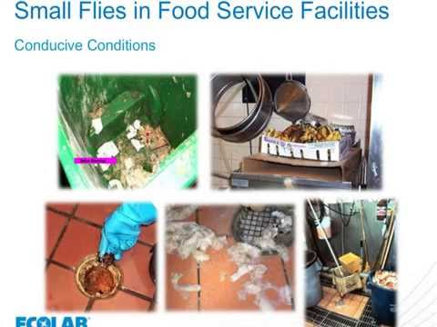Ecolab May 2014 Food Safety Matters Webinar - Small Flies, Big Problems