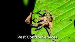 Pest Control Phoenix AZ  (520) 645-8011