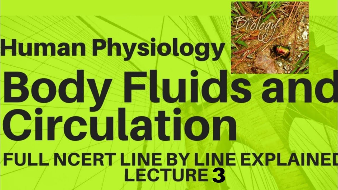 NCERT Ch-18 Body Fluids and Circulation class 11 Human Physiology Full  Explanation lecture 3 Boards