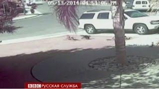 Кошка спасла мальчика от нападения собаки - BBC Russian