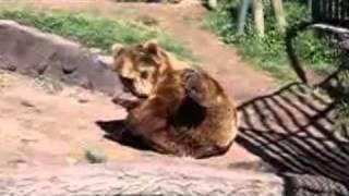 Masturbating animals