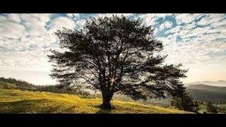 rozmowa z drzewem i odejście filtrów energii z ziemi i tworzenie nowej ziemi