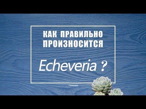 Как произносится Echeveria ?
