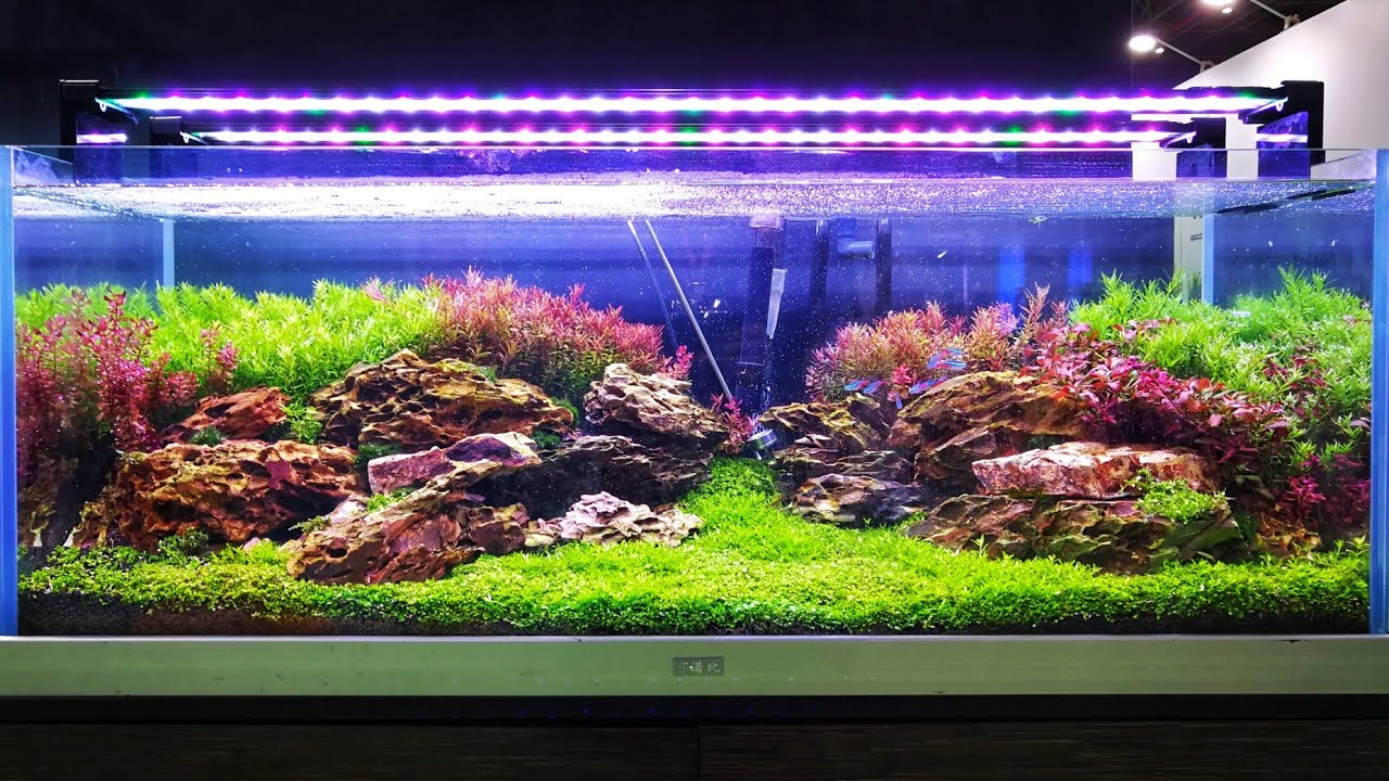 CIPS 2017 - LiuBo Aquarium (Aquascaping ideas) - YouTube