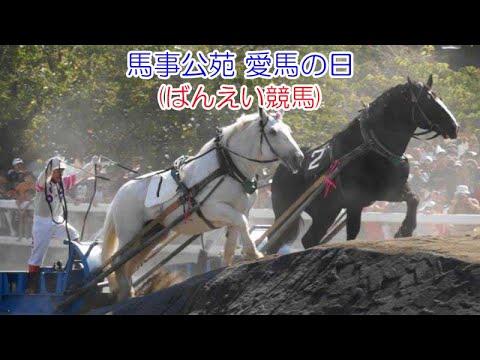 2014.9.23 馬事公苑 愛馬の日(ばんえい競馬)