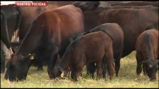 Новый проект в животноводстве в Славгородском районе