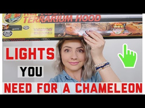 Lights You Must Have For A Chameleon!