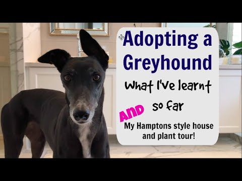 Adopting a Greyhound : what I've learnt so far