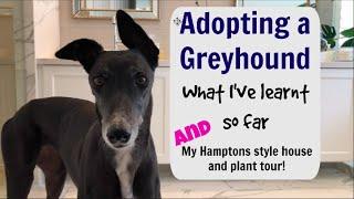 Adopting a Greyhound : what I've learnt so far