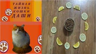 Эксперимент №2: отпугнет запах цитрусовых кошку Дашу?
