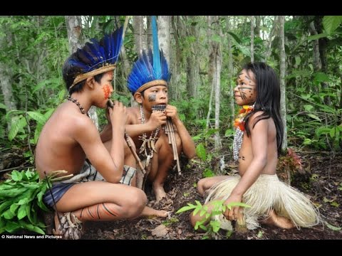 Life In Amazon Rainforest National Geographic Top Rated