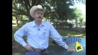 Cattle Electronic ID Tags and Tagging