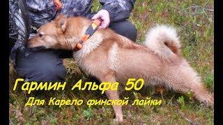 Гармин Альфа 50 с ошейником Т 5 для Карело финской лайки//Garmin alpha 50 with t 5 collar for Laika