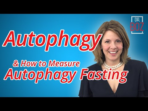 How To Estimate Autophagy Fasting By Dr. Boz