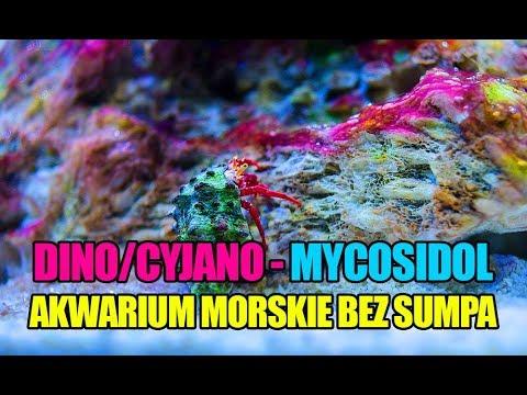 (53) Glossy Reef 200 - Cyjano w akwarium morskim - Mycosidol Colombo - Akwarium morskie bez sumpa