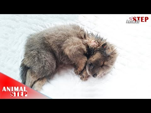Rescue of Little Puppies after Being Dumped in Septic Dain Pipe with Heartbroken