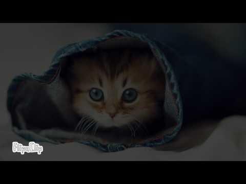 картинка  котика!!!( я просто больше нечего не придумала)