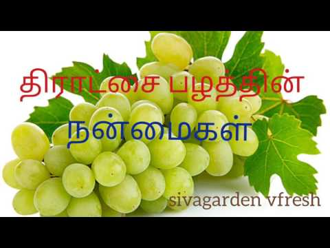Grapes Fruit Benefits in Tamil