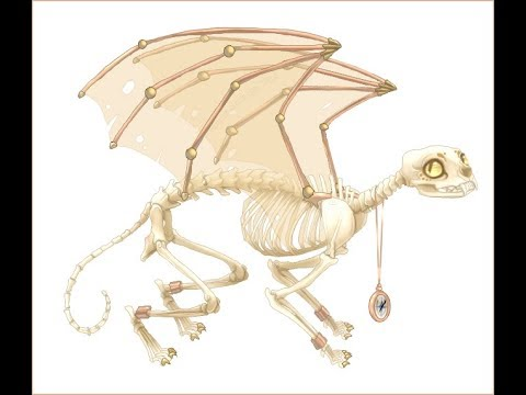 Cat Skeleton Cat Skeleton Anatomy Cat Skeleton Articulation