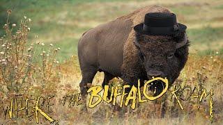 Where the Buffalo Roam (Short Film)