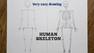 Easy way to draw human skeleton step by step