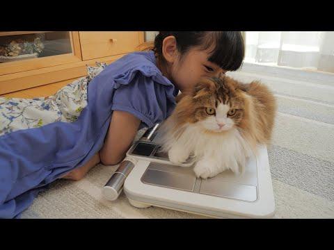 【身体測定】巨大猫疑惑のモフモフの中身は?体重&体長を公開