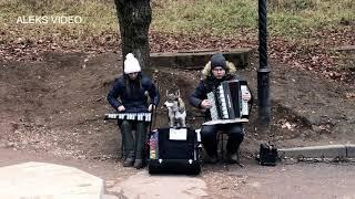 Поющая собака. The singing dog.