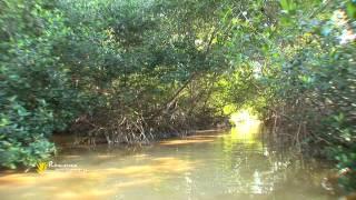 """Programa 7 """"Viajando por los Rincones de mi Tierra"""" 1er seg, Celestún, Yucatán"""